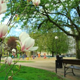 Park_Andersa_magnolia.JPG