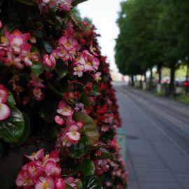 Aleja_kwiatowa_09.JPG
