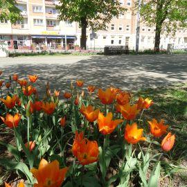 aleja_kwiat.JPG